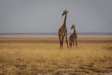 Amboseli NP 19