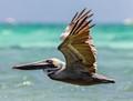 The Birds of Aruba by Tony Filson