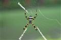 Joker Spider