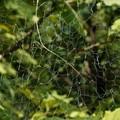 Unorganized Spider
