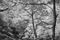 Shot taken using IR filter and processed to grayscale in Photoshop.  Taken on Taum Sauk Mountain, the highest mountain in Missouri.