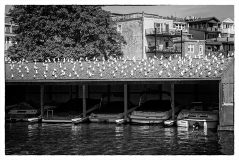 birdsstraightBW_900