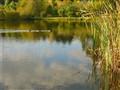 Take A Walk (or a Paddle)