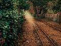 Autumnal Rail