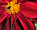 Apidae Meliponinae