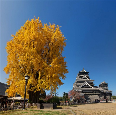 KUMAMOTO castle in fall color, revised