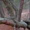 A walk in the woods 2: lichen on an oak tree