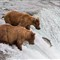 Katmai-July 2012-510
