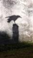 shadowbird