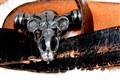 Dardo's belt