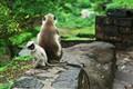 Aurangabad monkey