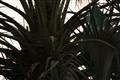 Palmtree - Sukarry