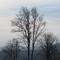 IMG_6619_bare_Tree