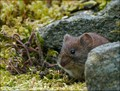 Glenlyon dormouse at the door to his house