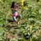 Sunflower (50 of 107)