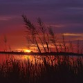 Freshwater Marsh Sunset