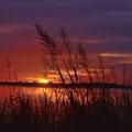 Freshwater Marsh Sunset