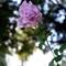 X100_Flower