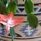 flowercrop