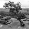 Tree at Capitol Reef