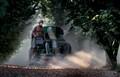 Beppe harvesting hazelnuts