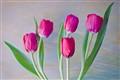 Spring Quintet