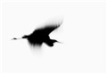Abstract Silhouette of Heron in Flight