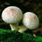 Fungi on Bed of Moss