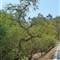 Roadside-Bonsai