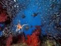 Feeding lionfishes