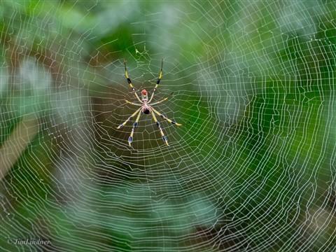 Spider P1030330