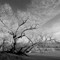 maple_river_trees_I