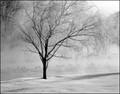 Single tree in the ice fog