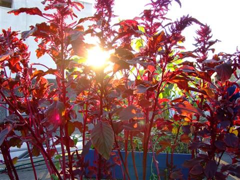 Light Through Plant