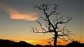 Pinyon Pine Sunrise