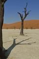 Shadow of a Dead Tree