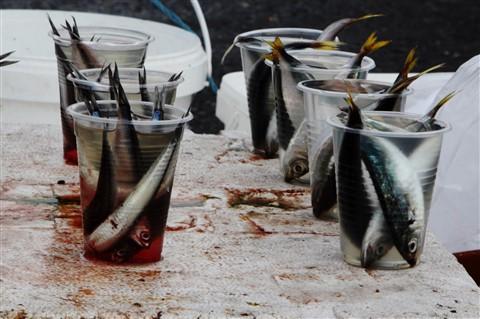 dead_fish