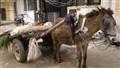 dp_donkey
