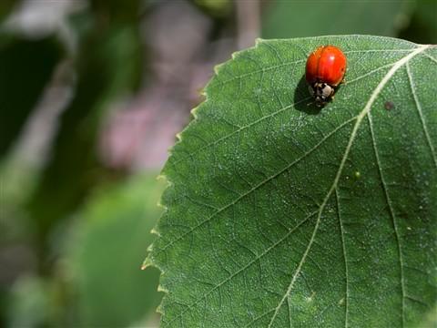 2012-05-17 Lady Bug 2