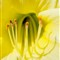 flower5-8-6-12_1024