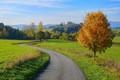 Autumn road in South Bohemia