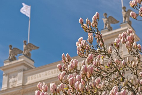 Lund - The magnolia blooming