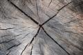 gray log