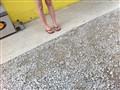 Little Legs