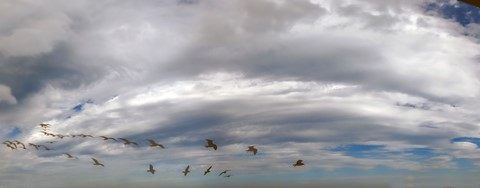 Seagull+Squadron_Sph_Cont_Lumix_1110475_492_12-9-16_2_T