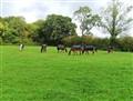 Racing/show  Horses