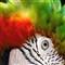 RX100 'a Parrot'