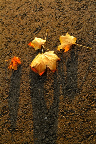 evening_leaves
