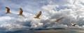 One gull. Multiple exposure