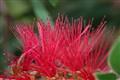 Porcupine Flower